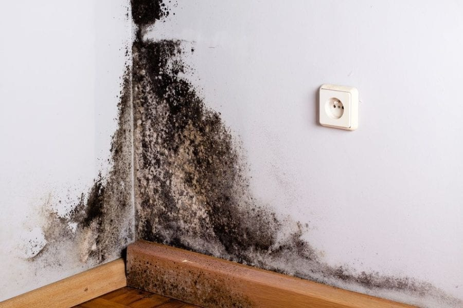 How do Home Inspectors Test for Mold
